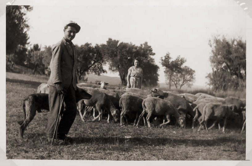 2-moutons.jpg