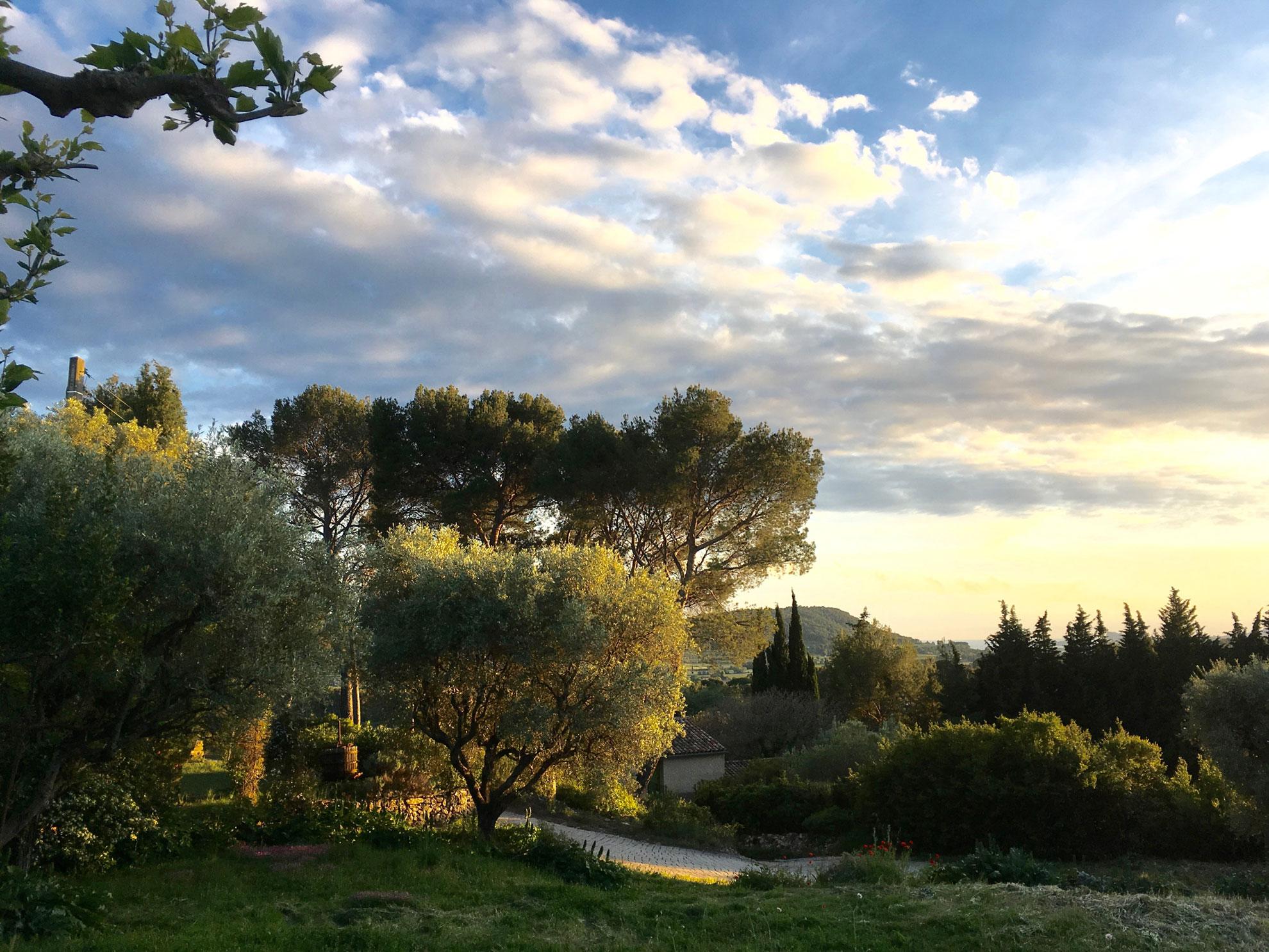 5-oliviers.jpg